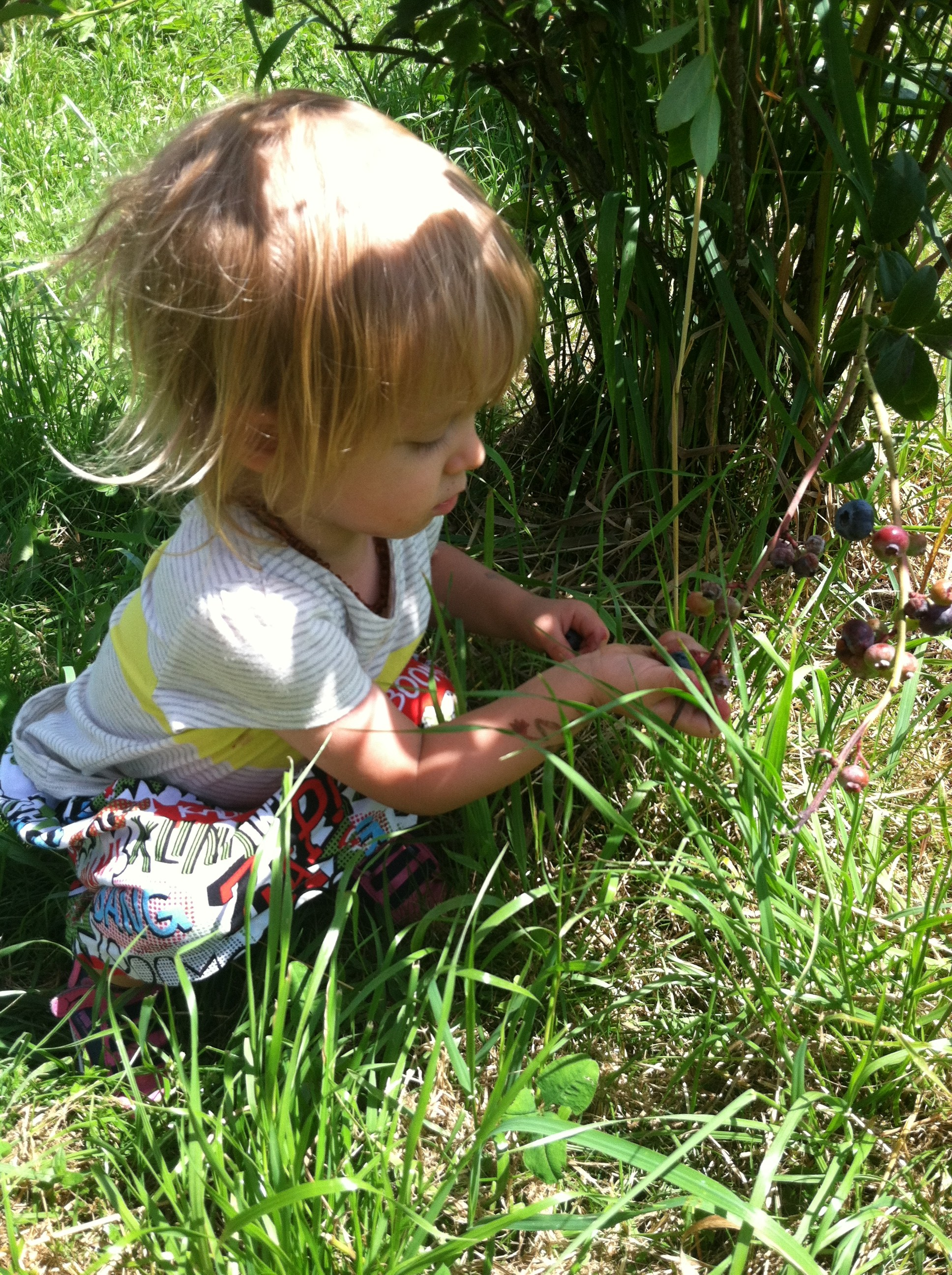 ... picking berries and I think this little berry muncher enjoyed herself