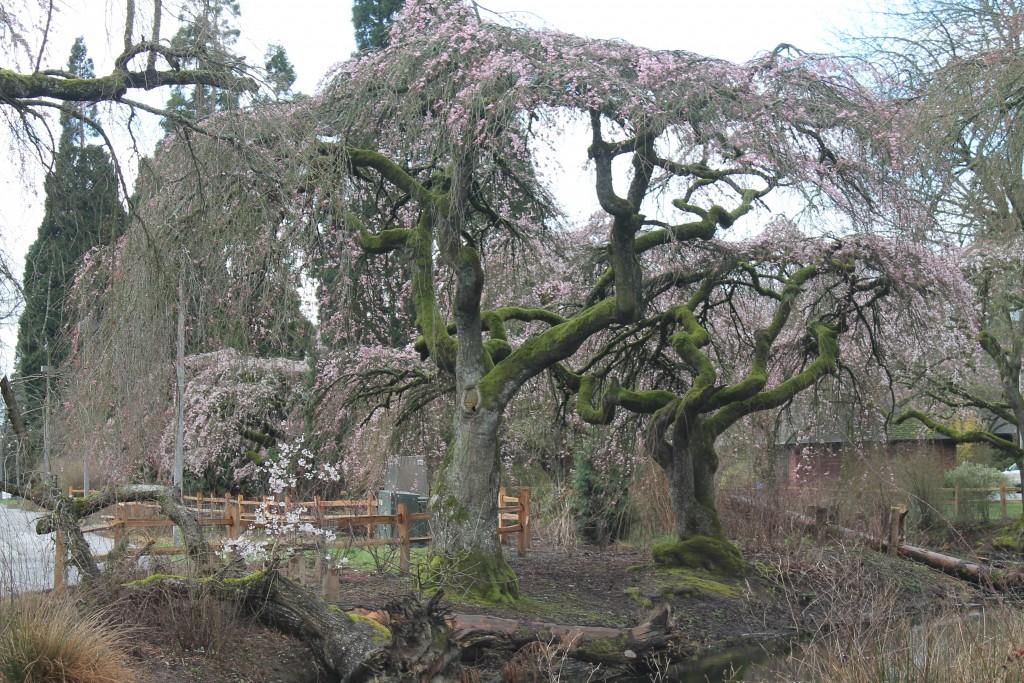 ADayInTheLife -Spring
