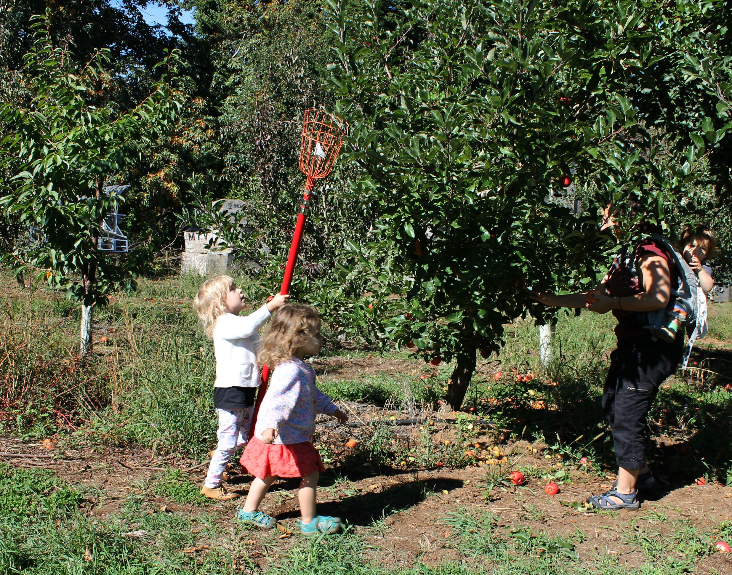 2015_09_19_ApplePicking.43
