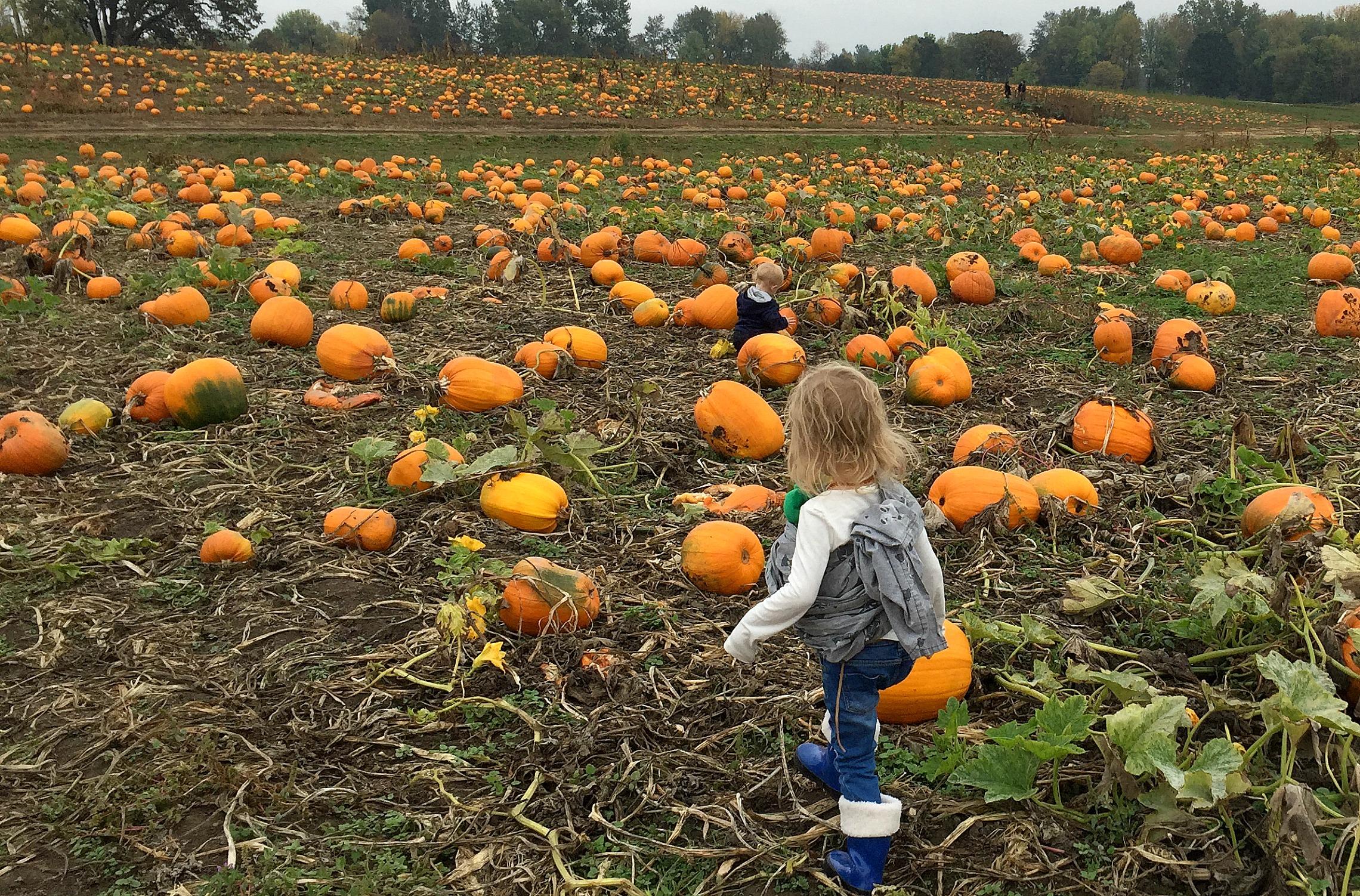2015_10_17_PumpkinPatching-2